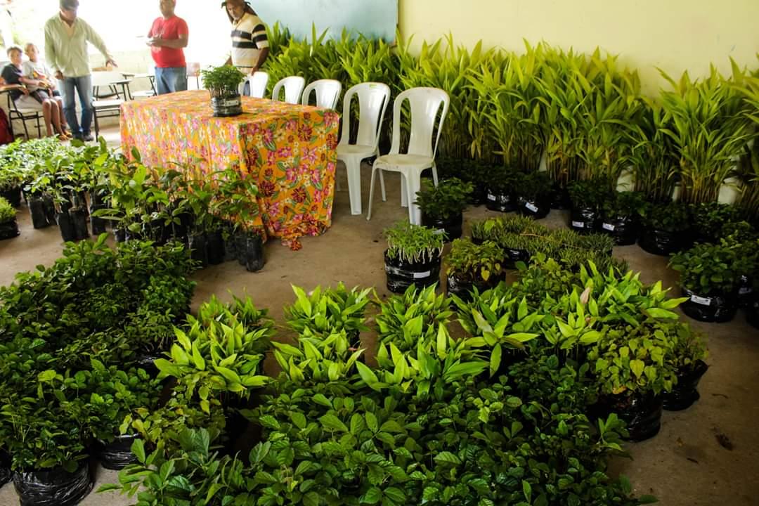 Famílias Sem Terras plantam 50 mil mudas de árvores na Chapada Diamantina