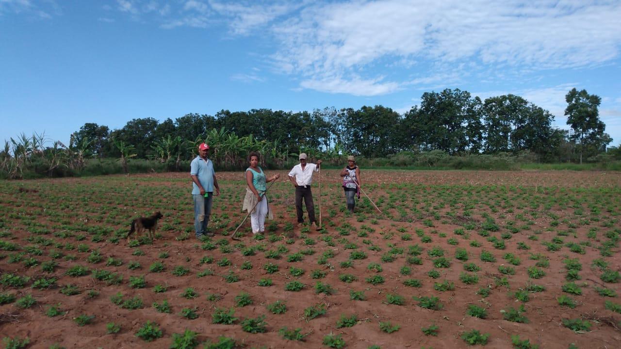 Em tempo de pandemia do Coronavírus (Covid-19), a agricultura familiar enfrenta o desafio de garantir a continuidade da produção.