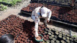 Famílias Sem Terra do Assentamento Antônio Araújo realizam colheita de cacau e cultivam mudas para campanha Nacional de Plantio de Árvores