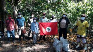 Famílias Sem Terra realizando a colheita do cacau