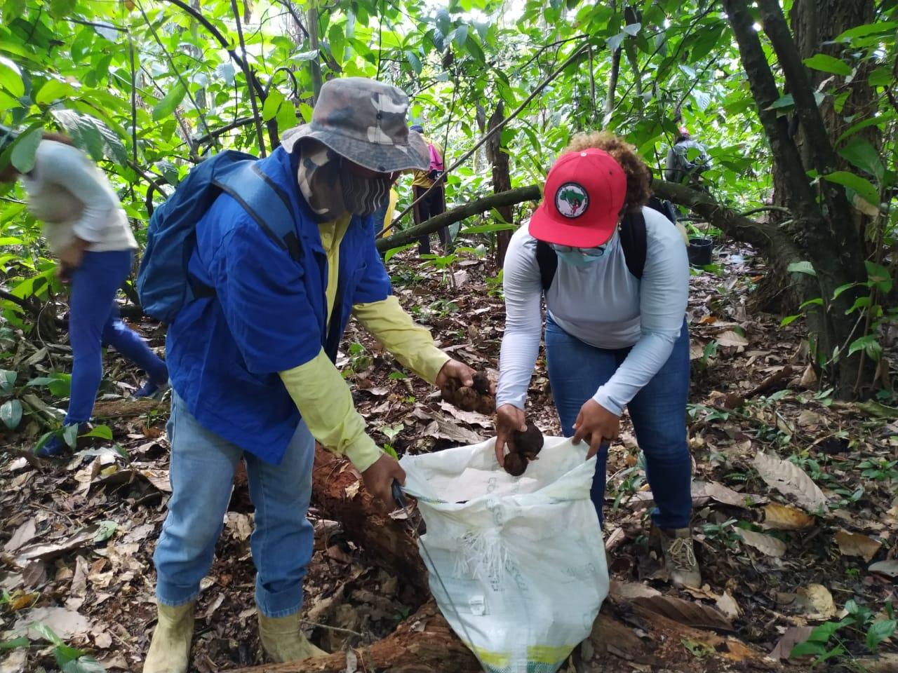 Sementes que geram vida: MST realiza coleta de sementes no Bioma Mata Atlântica