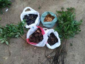 MST realiza coleta de sementes no Bioma Mata Atlântica
